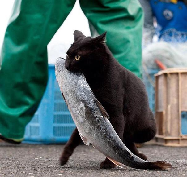 15. Котёнок и его добыча