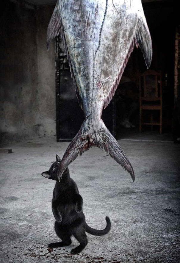 12. У котёнка есть большая мечта